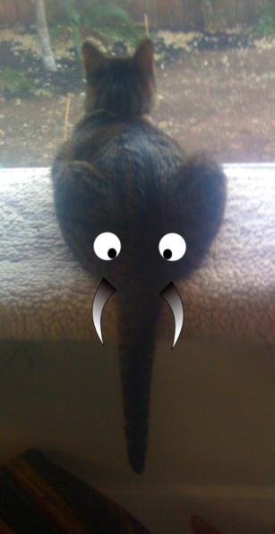 elephant cat butt